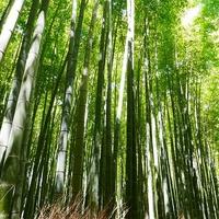 京都府でスピリチュアル鑑定をするならどこ?人気占い師3選