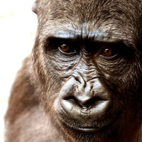 【動物占い】どっしりとした猿の性格・相性・恋愛は?2020年の運勢も!