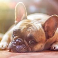 ルノルマンカード占い「犬」の意味とは?組み合わせについて