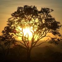 ルノルマンカード占い「木・樹木」の意味とは?組み合わせについて