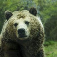 ルノルマンカード占い「熊」の意味とは?組み合わせについて